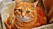 В Японии появилось приложение, которое может переводить с кошачьего